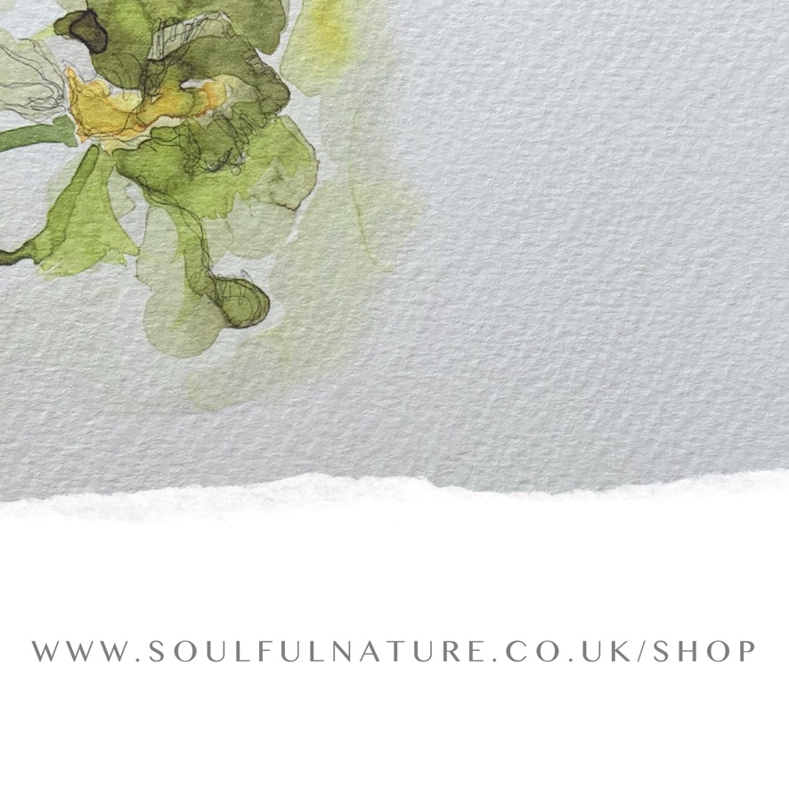 The soulful Nature Shop
